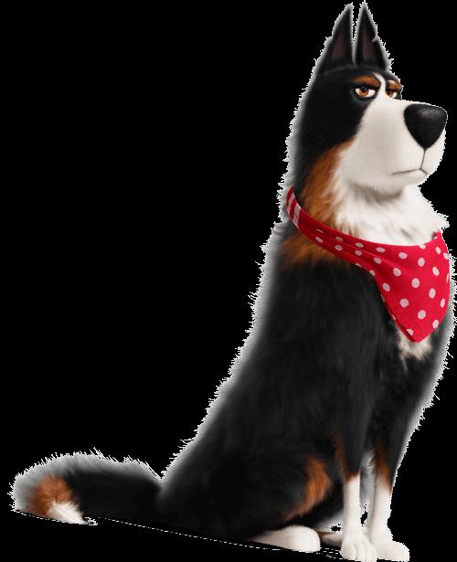 Secretlifeofpets Secret Life Of Pets Pets Movie Cute Dog Pictures