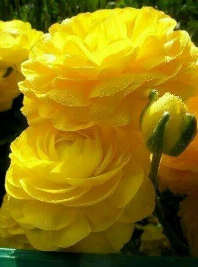 Resultado de imagen de flores amarillas pinterest