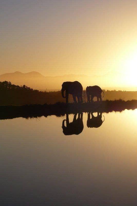 Ir a África y fotografiar animales en vida salvaje.