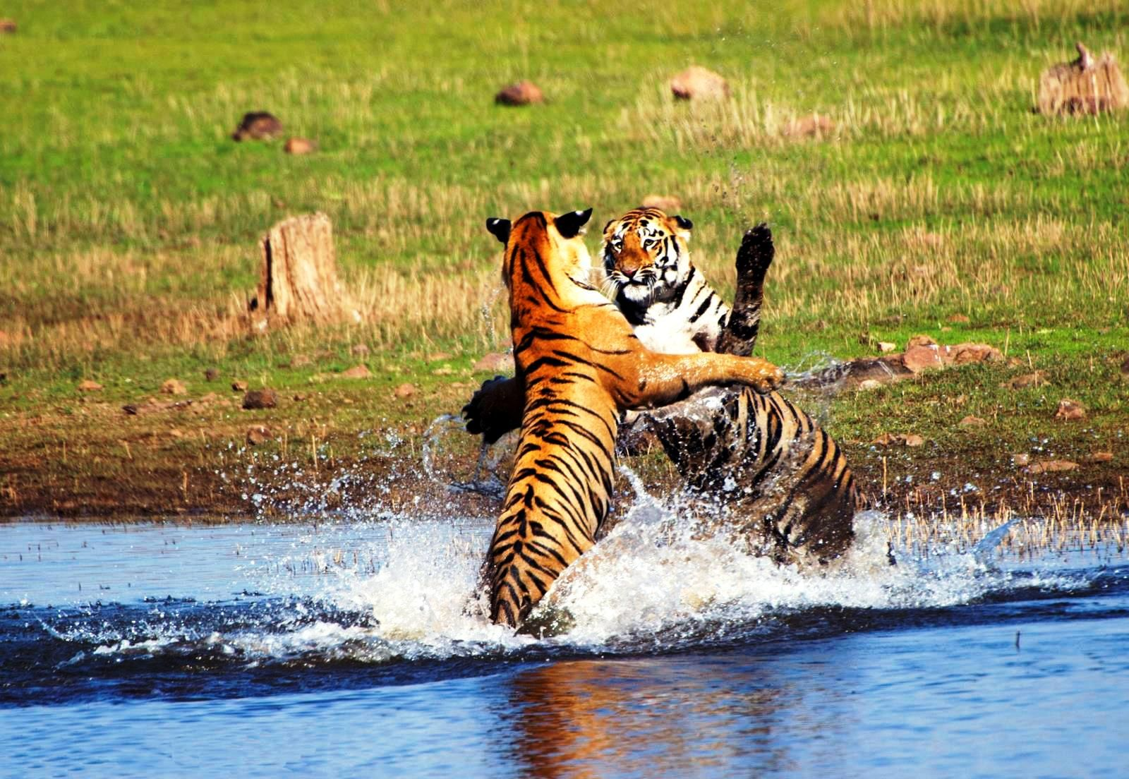 Wildlife Trip To Tadoba 3days