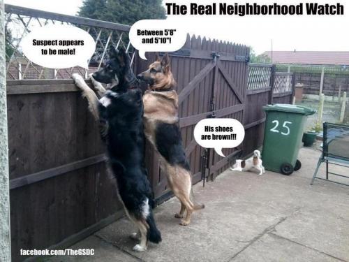 Neighborhood Watch Meme Slapcaption Com Animal Captions Cute Funny Animals Funny Animals