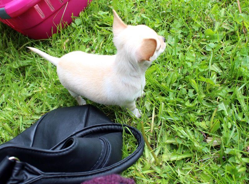 Päivä kuvin/ Bloggarideittiä, pieniä koiria ja hengailua vanhalla matkahuollolla