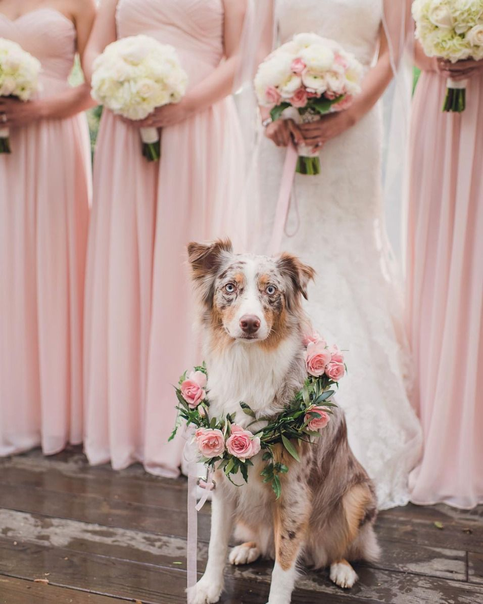 30 Dogs Of Honor That Did A Very Good Job Indeed Dog Wedding Photos Wedding Pets Wedding Photos