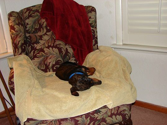 I'm so lucky to have adopted Leonard, the Dachshund at the