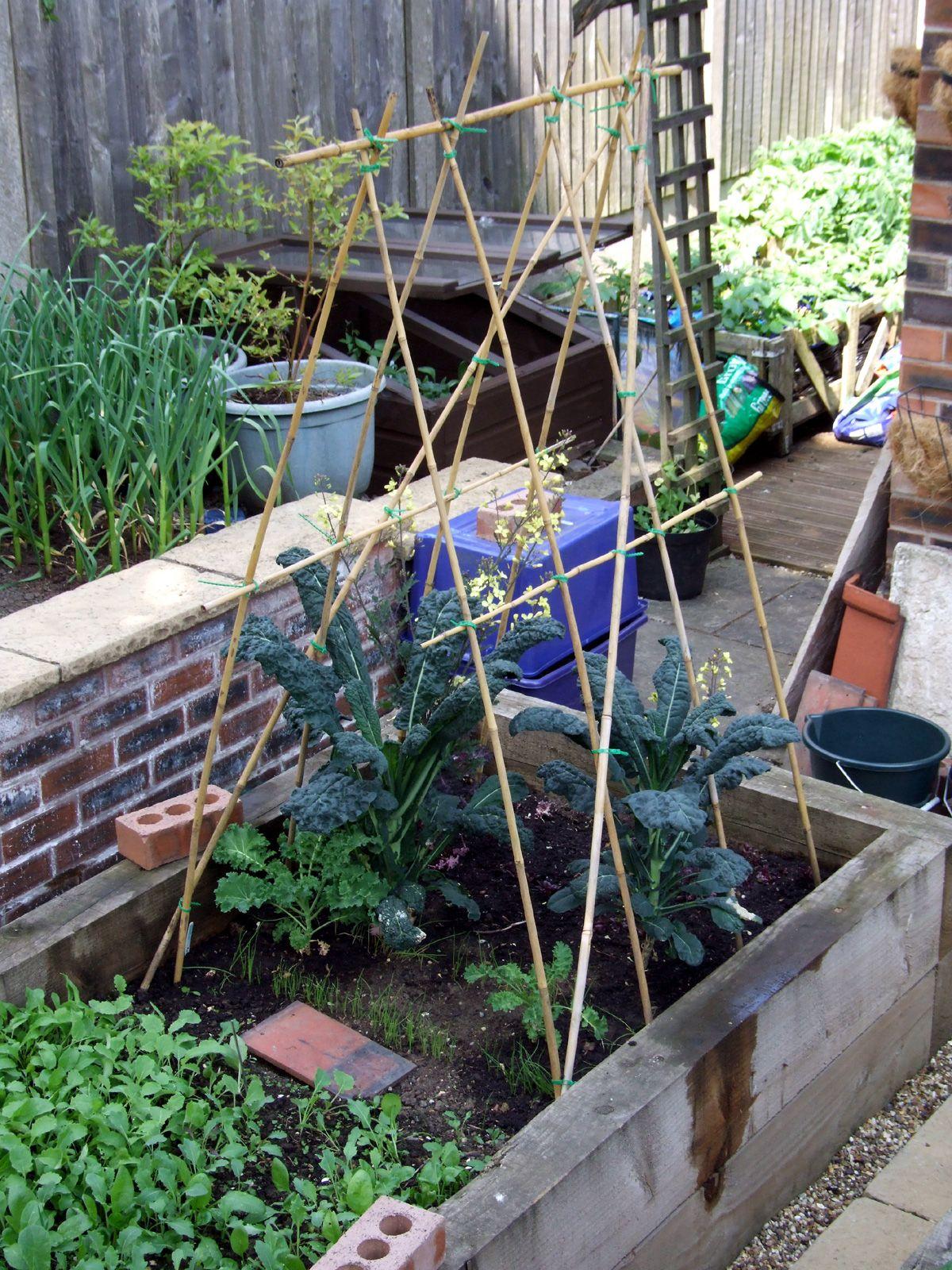 Runner Bean Frame | Garden | Pinterest | Gardens