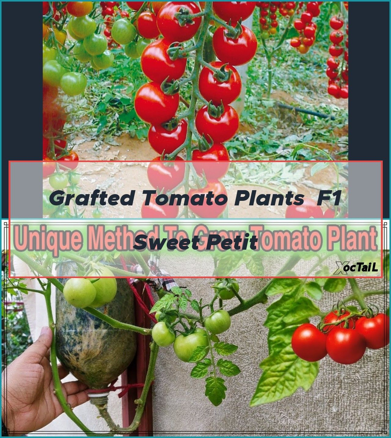 Easy Project To Deep Water Tomato And Other Plants During Hot