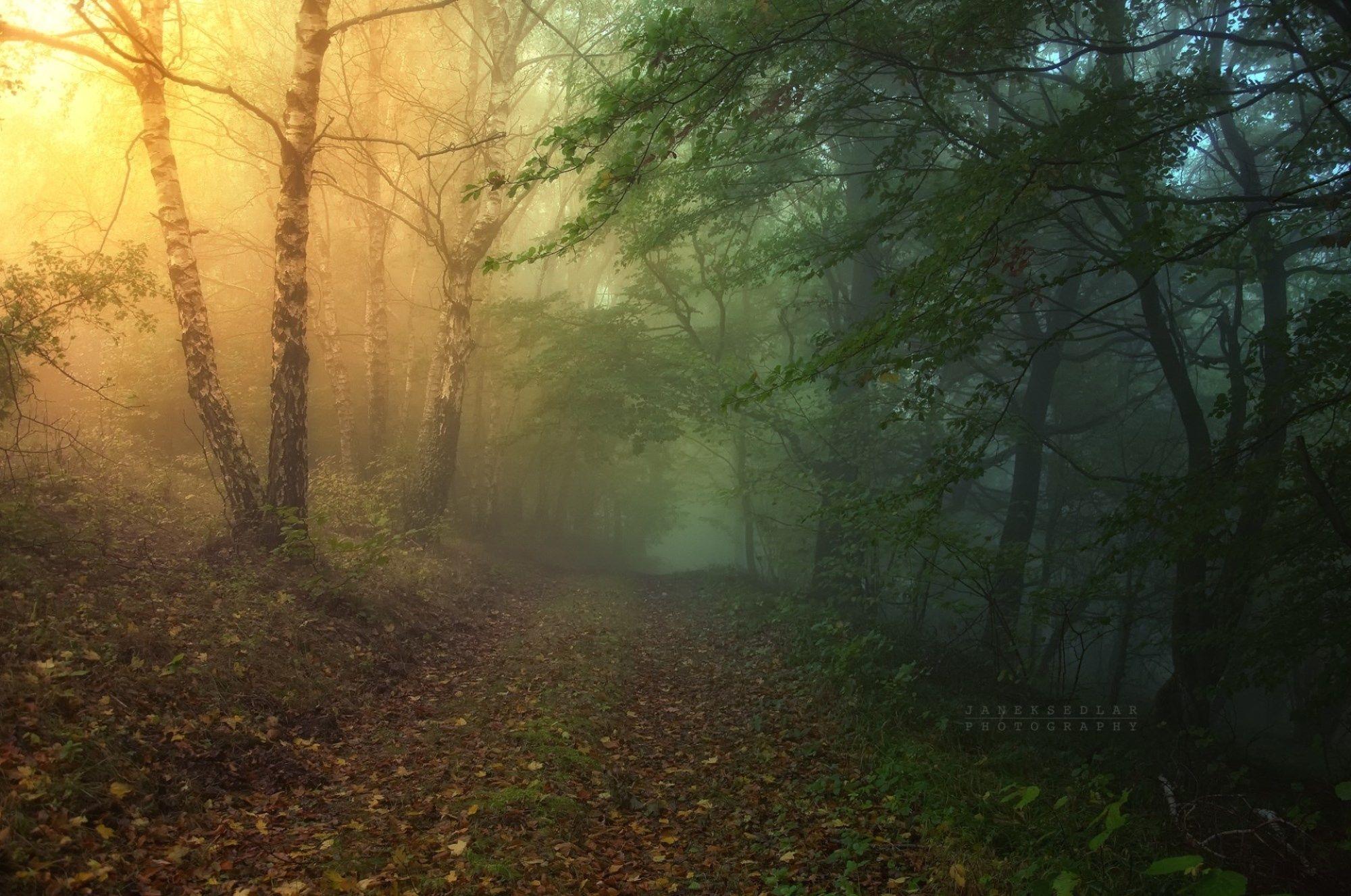 Landscape forest autumn fall wallpaper | 2000x1327 | 135934 | WallpaperUP