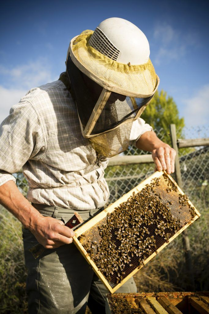 How Disease Can Cause Bee Population Decline in 2020 (With ...