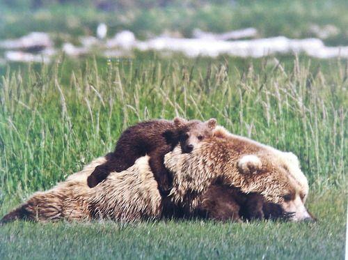 #Bears #Love #Precious..... :-)