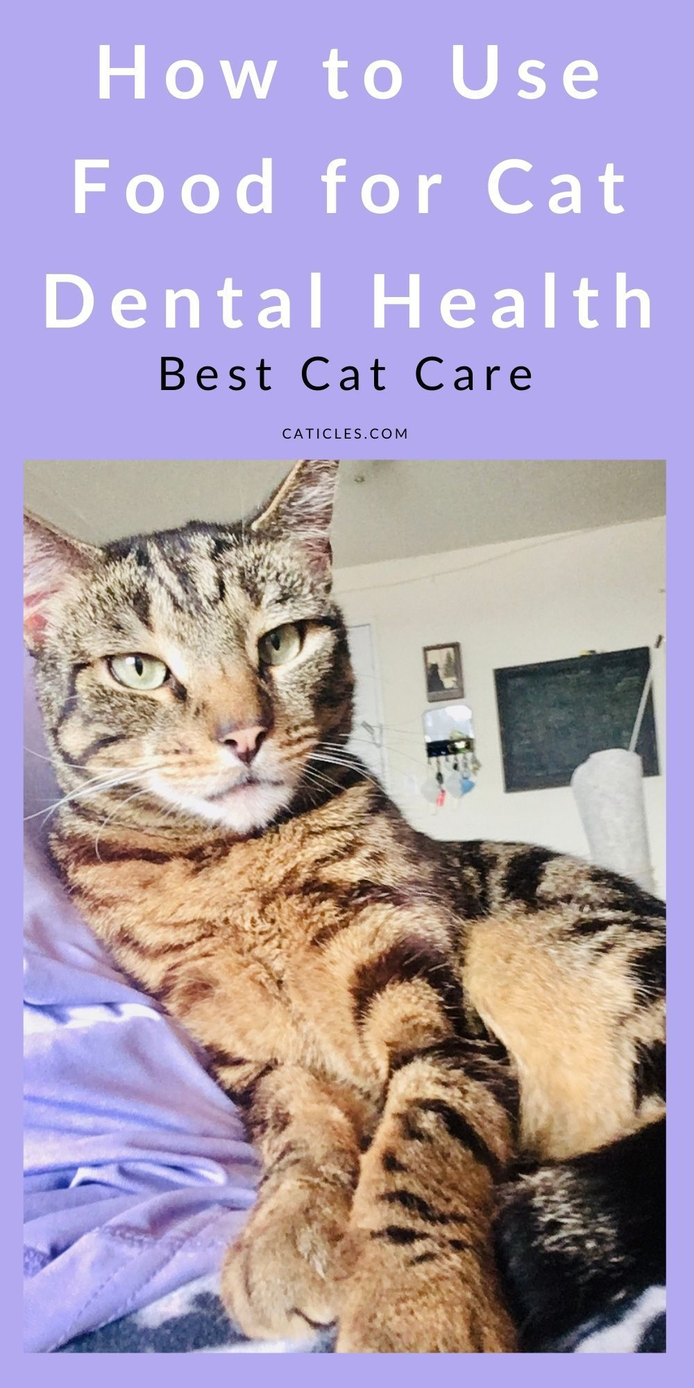 Is wet food bad for cats teeth dental health guide