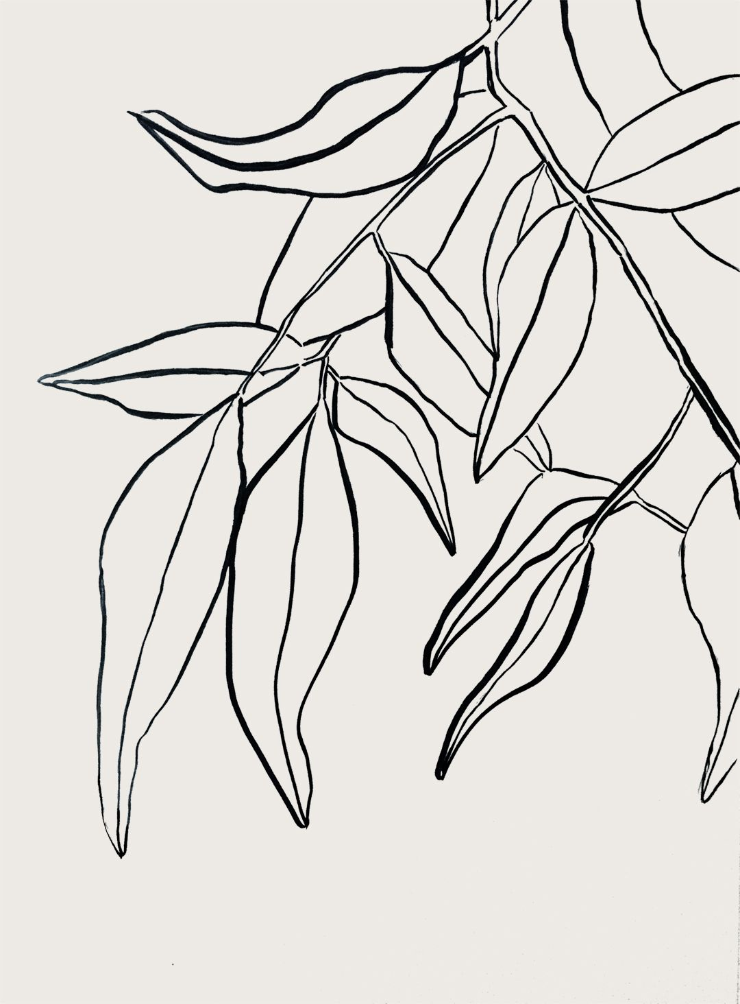 Botanical Leaves Drawing