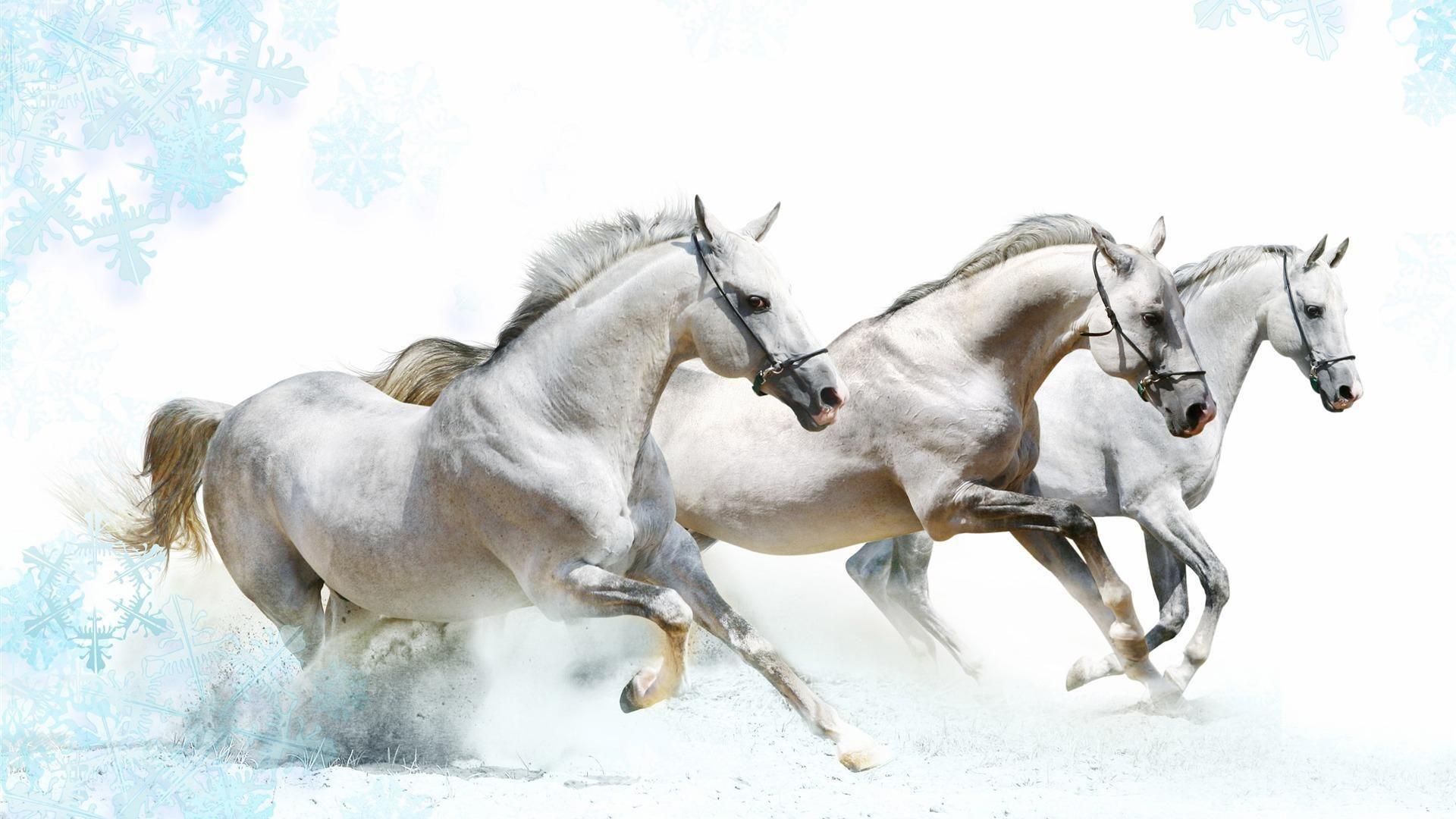 Fantastic Wallpaper Horse Art - 1213736861343ae4eb641cf93c8003c4  Pictures_94393.jpg