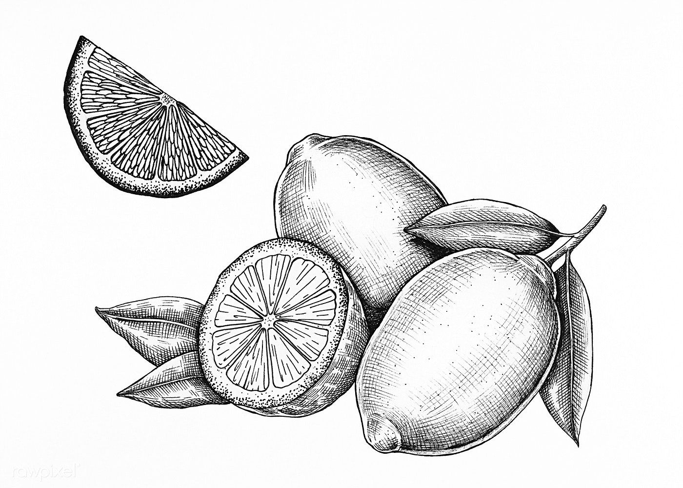 Download premium illustration of Hand drawn fresh lemons
