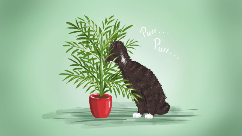The Best Low Maintenance Pet Friendly Houseplants Plants Pet