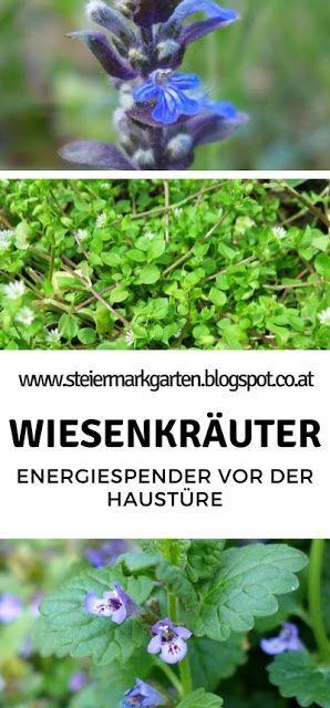 Die Natur stellt unzählige Energiespender vor unserer Haustüre bereit, wir müssen sie nur richtig nutzen. Die meisten Wild- und Wiesenpflanzen, die als lästiges Unkraut bekannt sind, liefern wertvolle Inhaltsstoffe und können bei der Linderung diverser Beschwerden helfen. #kräutergartenbalkon