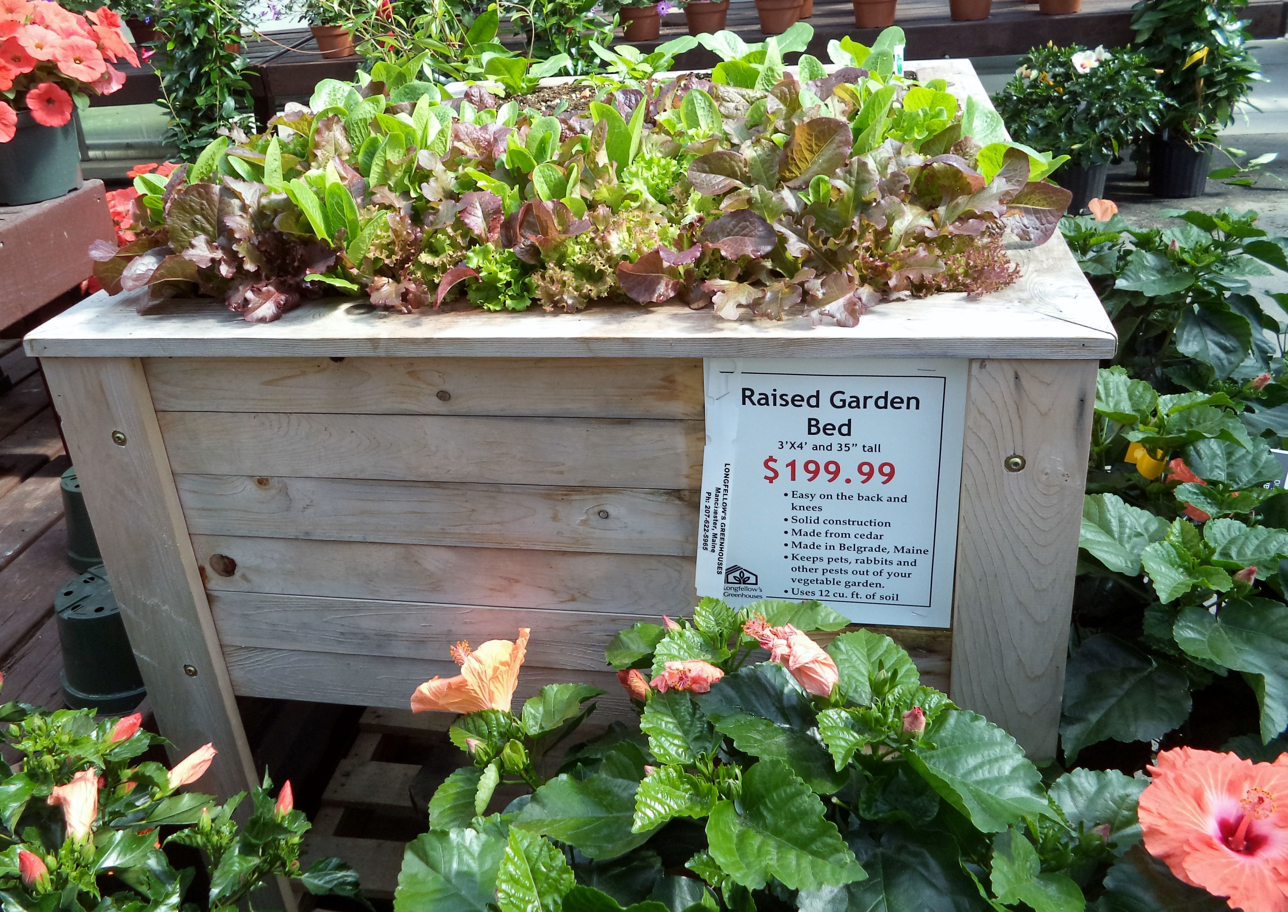 Small space? Try a raised bed for planting everything from