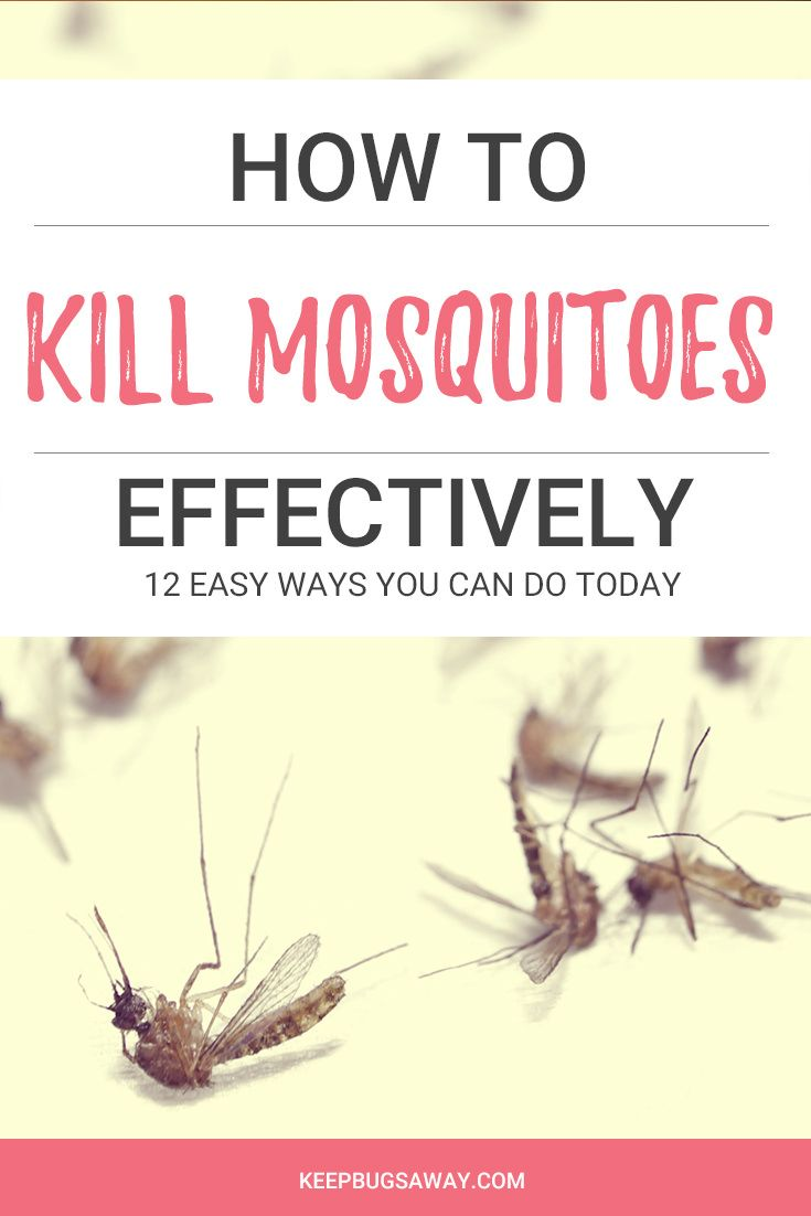 Pin on Home made repellent and bug killers