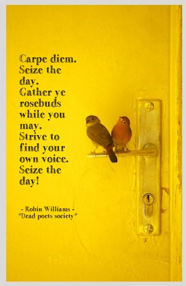 Carpe Diem Seize The Day Gather Ye Rosebuds While You May Carpe Diem Quotes Quote Posters Carpe Diem