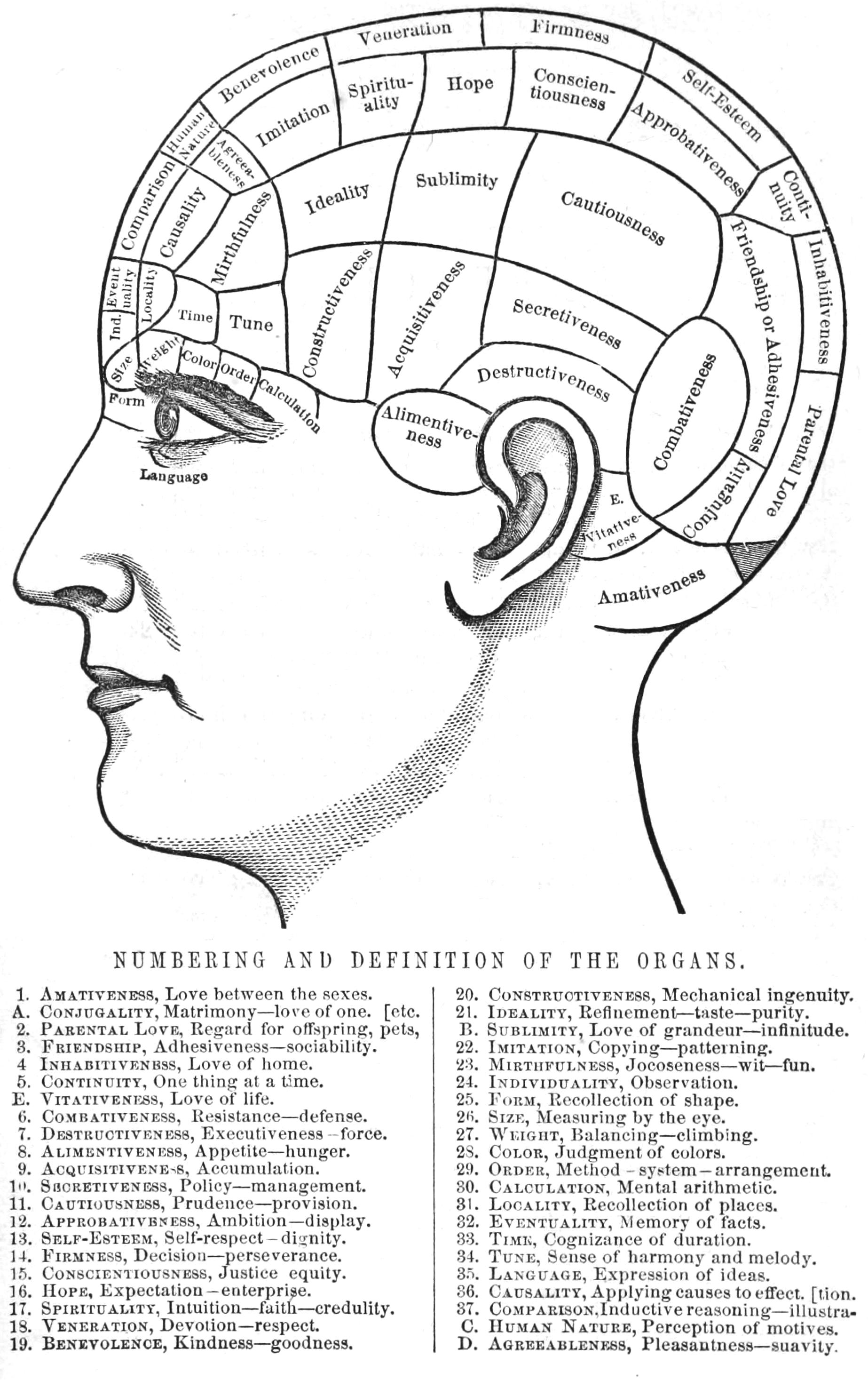 Phrenology Chart Poster Phrenology chart poster | Diagrams & Maps ...