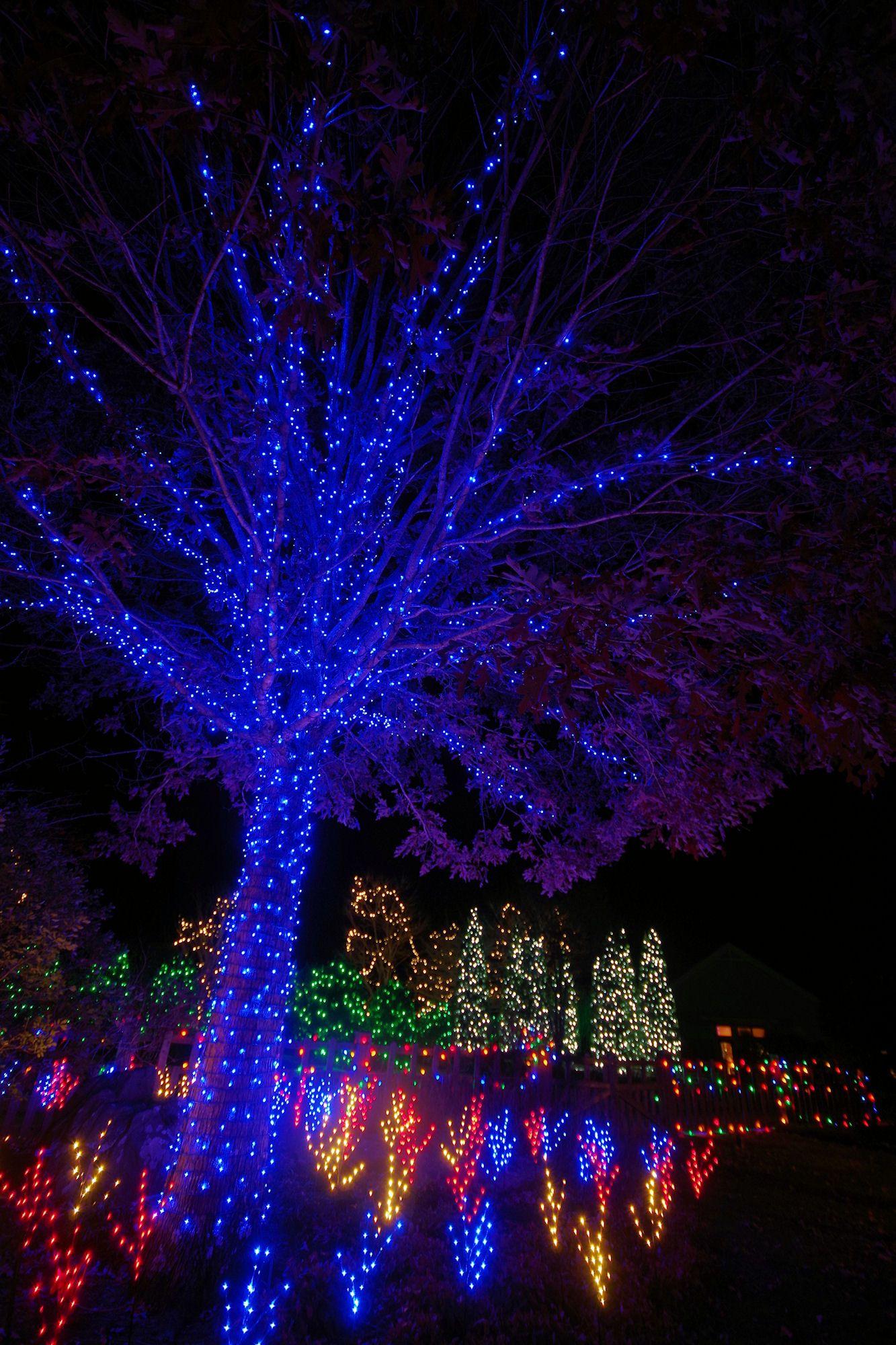 Winter Lights at North Carolina Arboretum in Asheville | Christmas ...