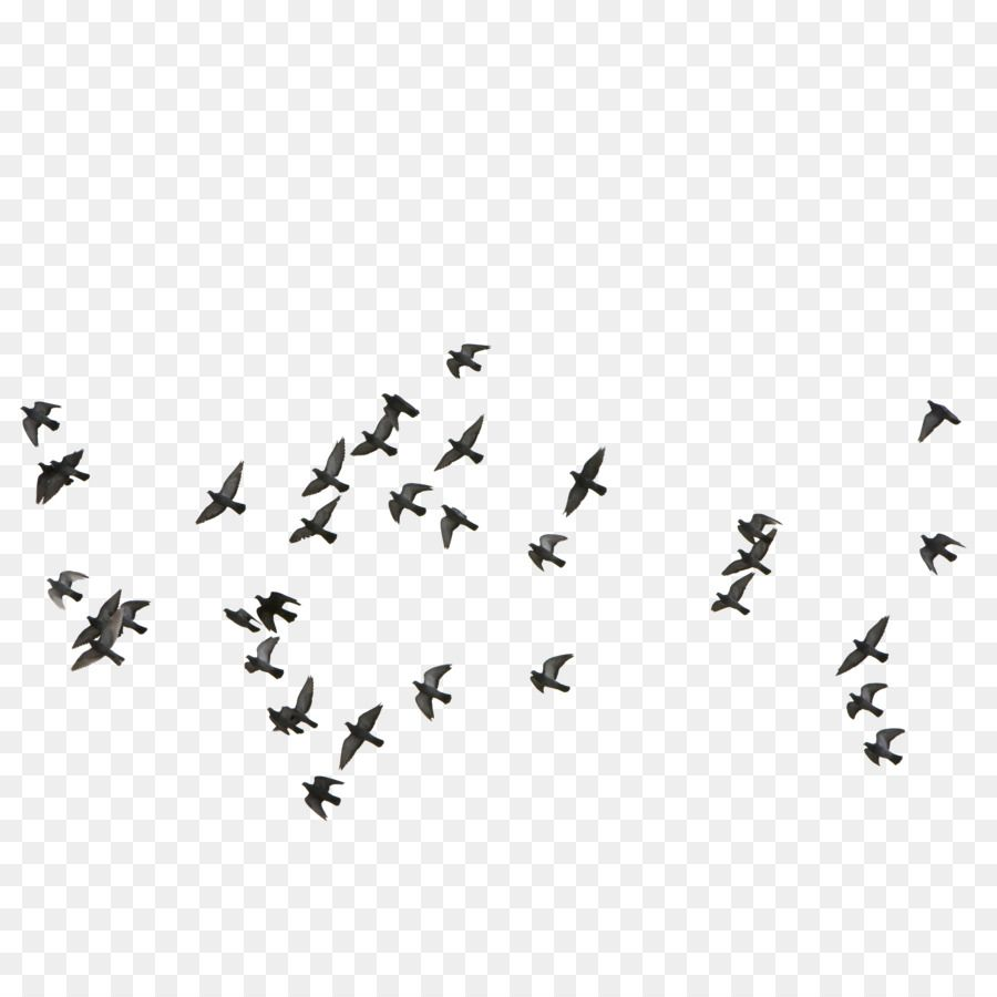 Aerial Fly Little Bird Silhouette A Flock Of Birds Flying Seagull Wild Goose Png Transparent Clipart Image And Psd File For Free Download Flying Bird Silhouette Bird Silhouette Flying Bird Drawing