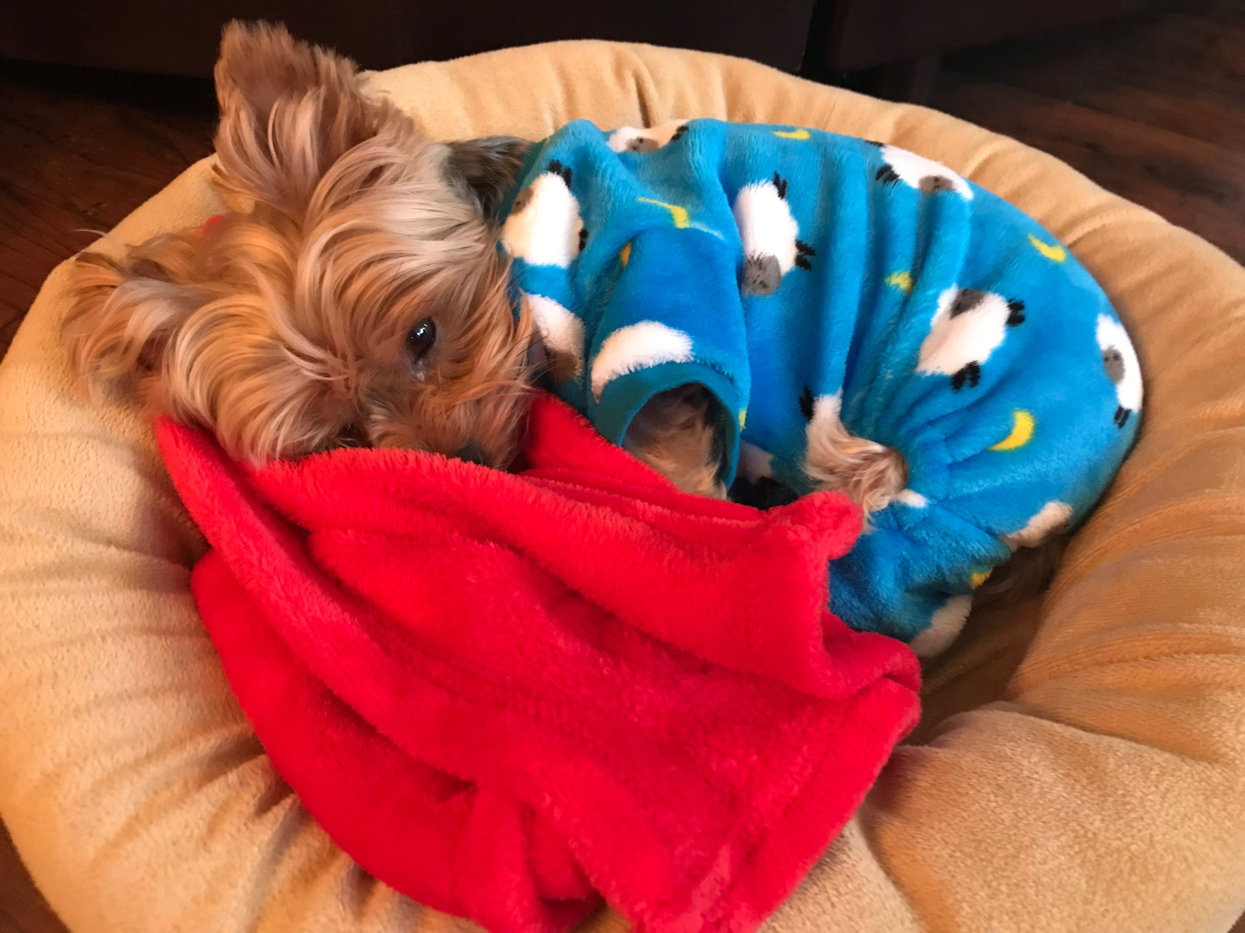 Jake The Yorkie With Images Yorkie Cute Dogs Bean Bag Chair