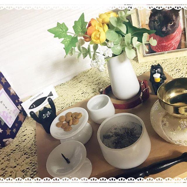 6月19日腎不全の為お空へ旅立ちました 13年間本当に本当にありがとう 愛猫 猫 黒猫 ペット 仏壇 ペット仏壇 ディアペット ありがとう 大好き ペット 仏壇 仏壇 ペット