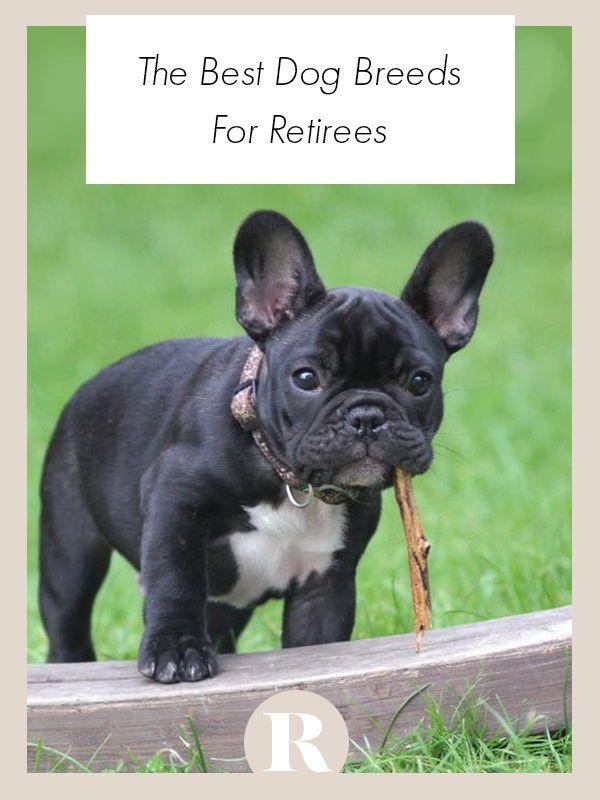 The Best Dog Breeds For Retirees Best Dog Breeds Dog Breeds Dogs