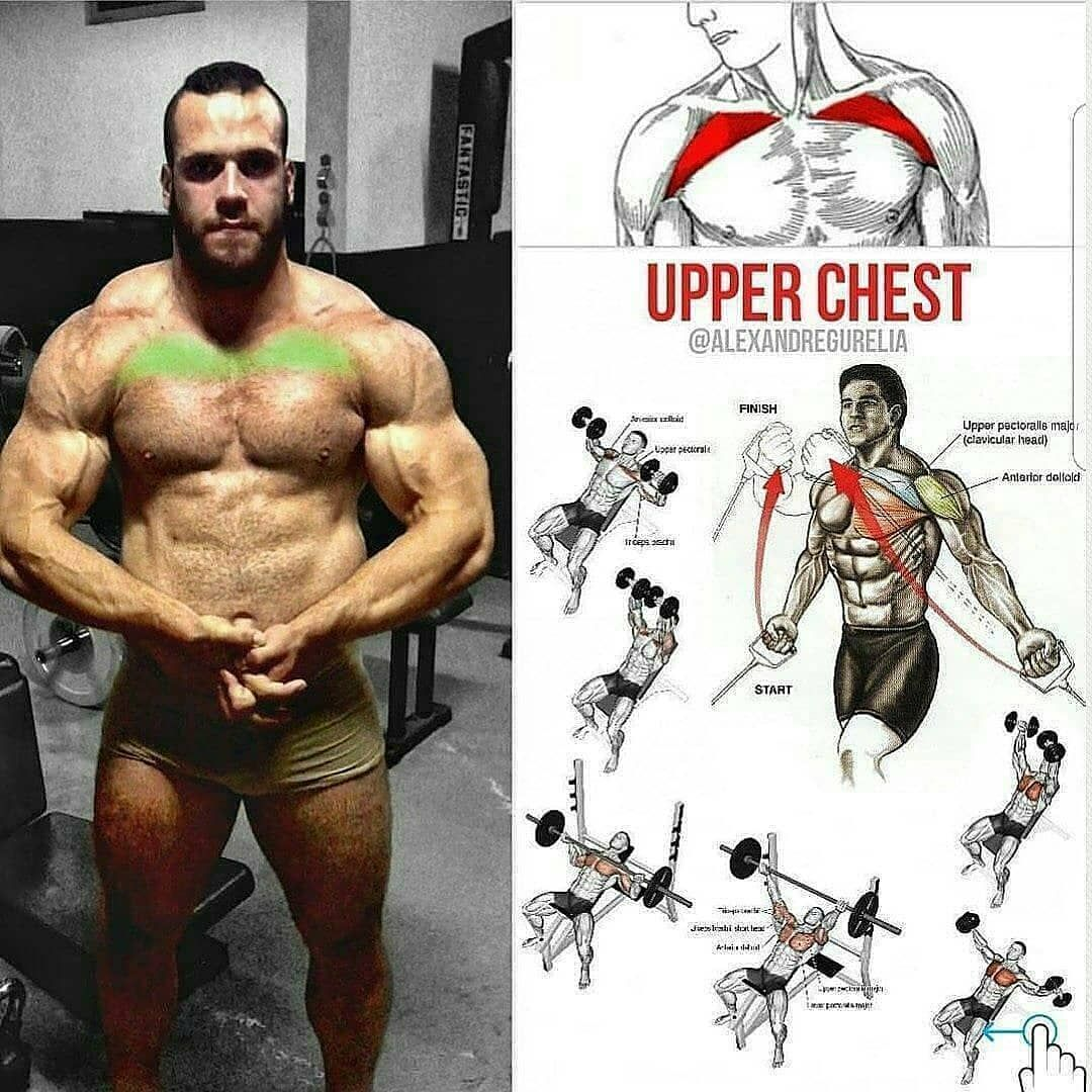 Exercise Of The Upper Chest Exemple Workout Lower Middle Pectoral Muscle And Internal Do Exercises As Shown In