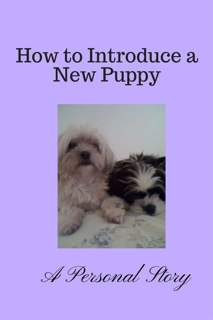 How To Introduce A Puppy To An Older Dog Pets Dogs Pinterest