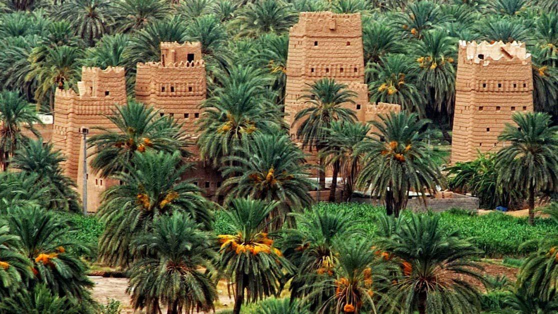 Najran Saudi Arabia Saudi Arabia Cactus Plants Landscape