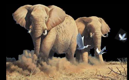 Elephant tune