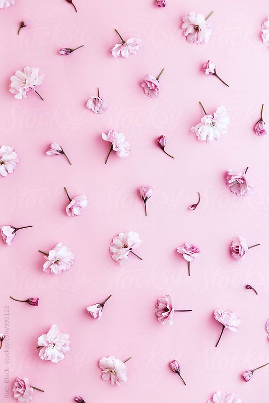 Ruth Black For Stocksy United Wallpaper Pastel Pink