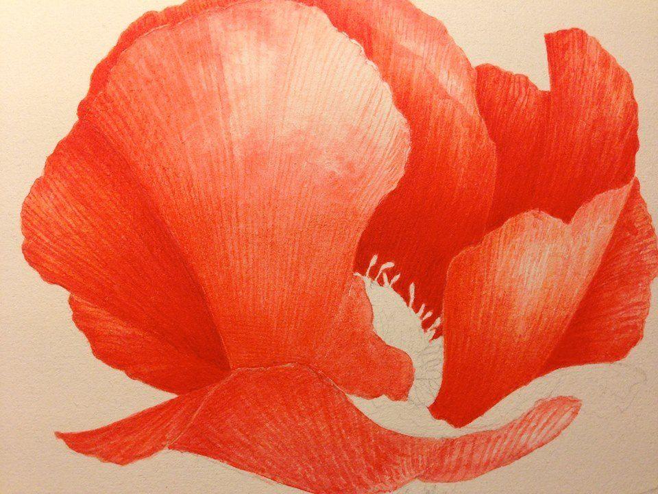 Da aquerelles botaniques, Vincent Jeannerot