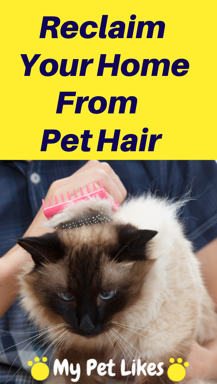 Your Home Cloths Everything Is Covered In Pet Fur We Ll Help Get It Under Control Reclaim Your Stuff From All That Loose Shedded Dog Health Tips Pets Cat Grooming