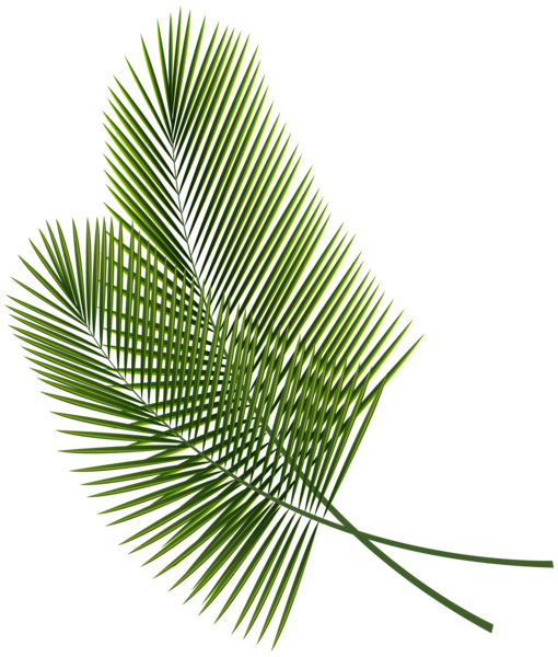 Download Png Leaves Tropical Png Gif Base See more ideas about tropical leaves, tropical, leaves. download png leaves tropical png