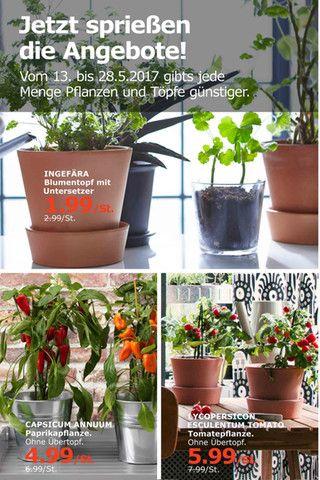 Kaufda Mobile Prospektor Mit Bildern Pflanzen Blumentopf Garten
