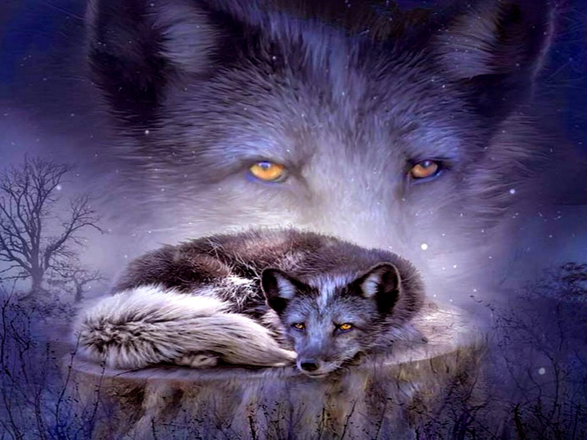 native american wallpaper fox - photo #3