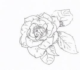 Kleurplaat Roos Dozen Pinterest Drawings Pencil Drawings En Art