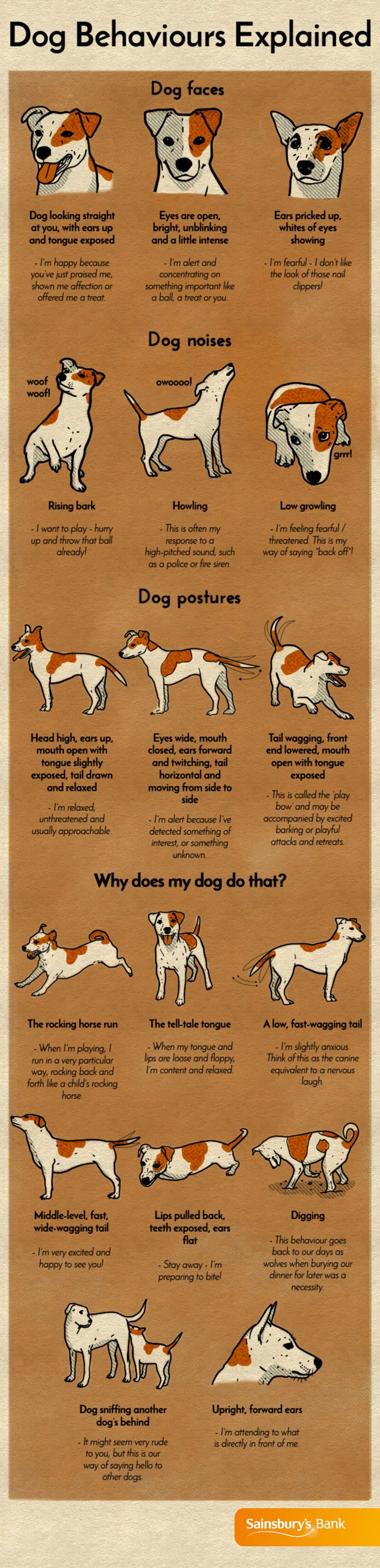 What Your Dog Is Trying To Tell You Dog Care Pets Dog Noises