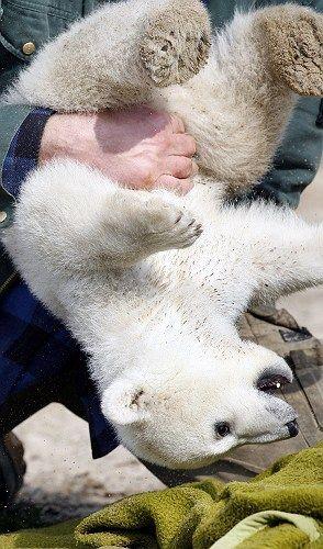 RIP Knut the polar bear