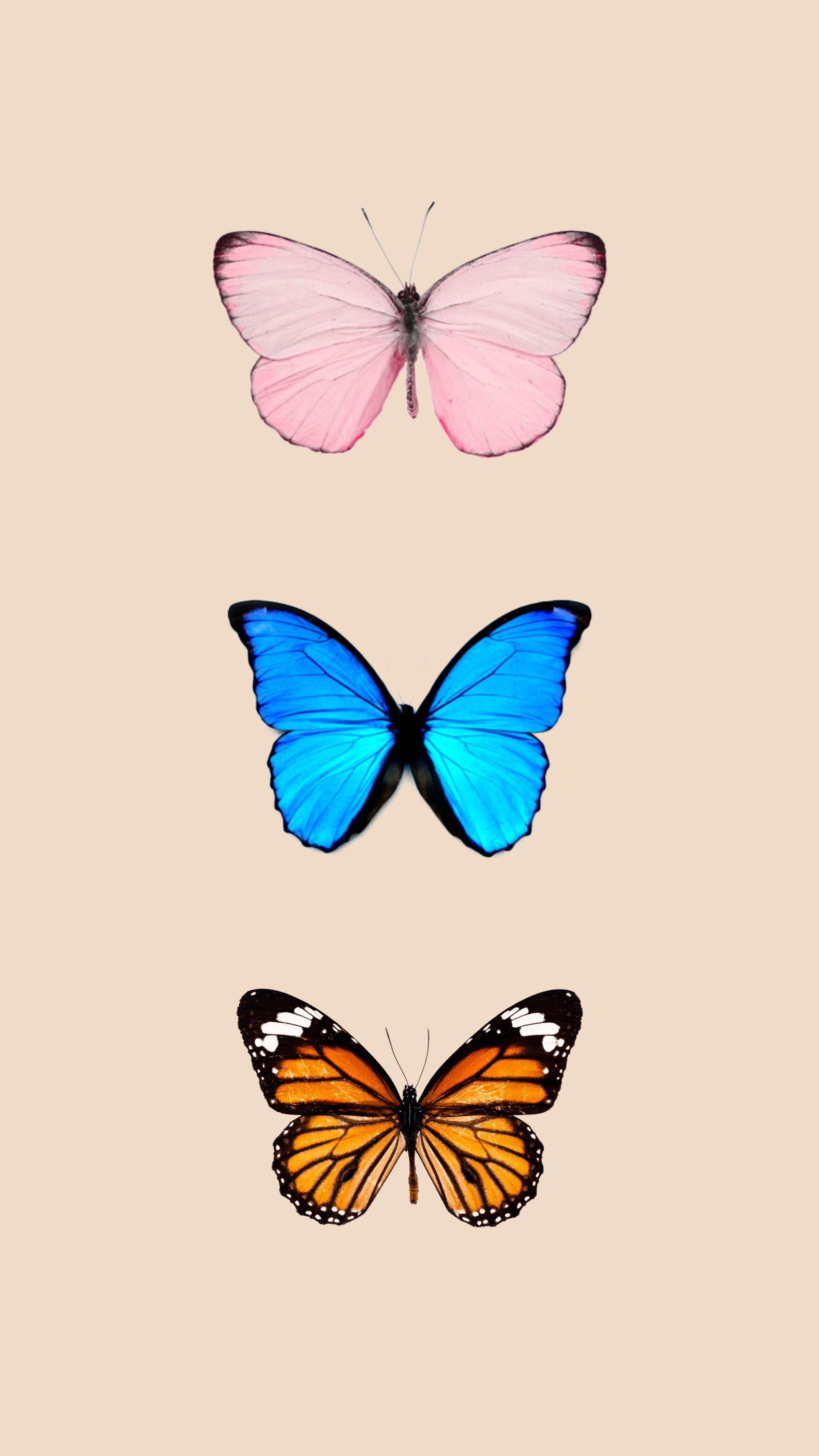 Butterfly wallpaper | Butterfly wallpaper backgrounds ...