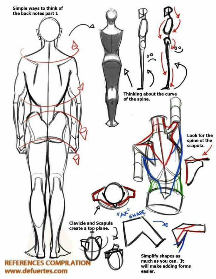 Pin by max max on Drawing | Pinterest | Anatomy, Anatomy reference ...