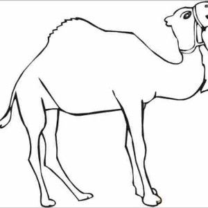 Camel Thirsty Coloring Page