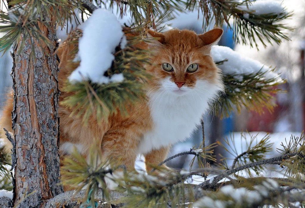 Картинки зима кошка