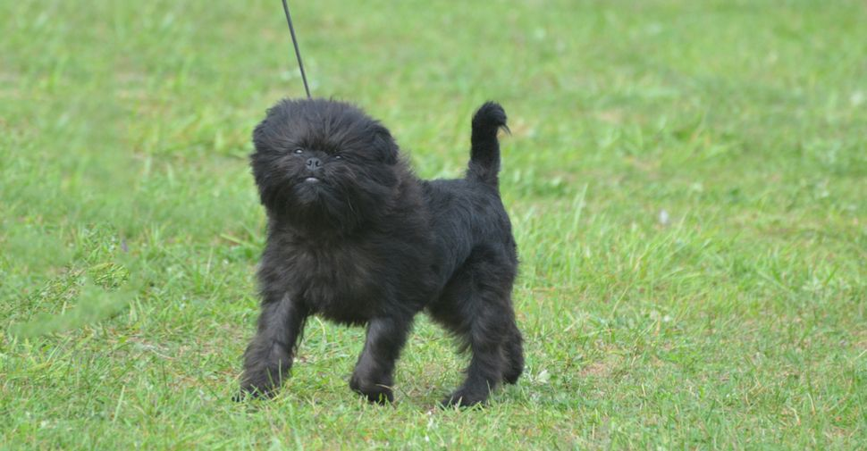 Who S Who Of The Small Dog Breeds Dog Breeds Small Dog Breeds Cute Small Dogs