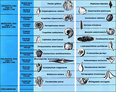 Fossil Identification Chart Google Search