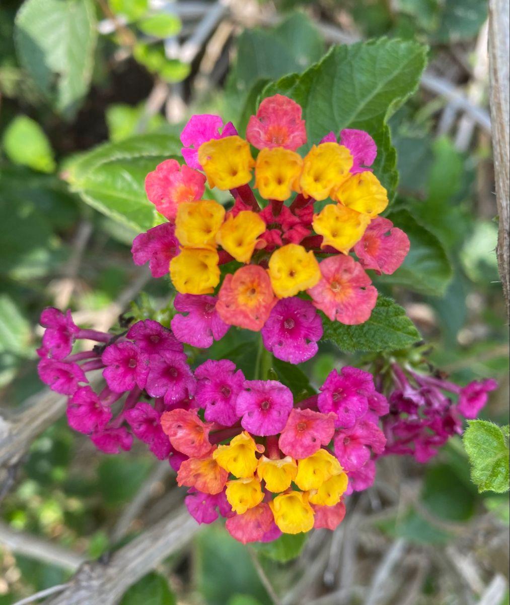 Today's #flowerlove #nature beautiful #multicolorflowers #explore_floral_ #flowerstalking #igscflowers #splendid_flowers #ig_monumentalworld_flowers #ig_naturelovers #flowers_moody #petal_perfection #quintaflower #absolutelyflora #captures_flowers #ig_exquisite
