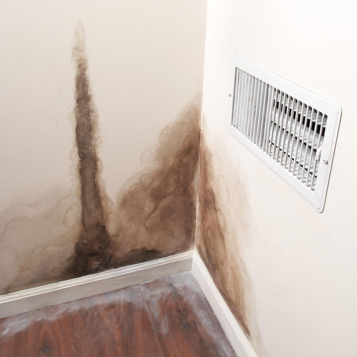 How to Prevent Bathroom Mold | Mold in bathroom, Mildew ...