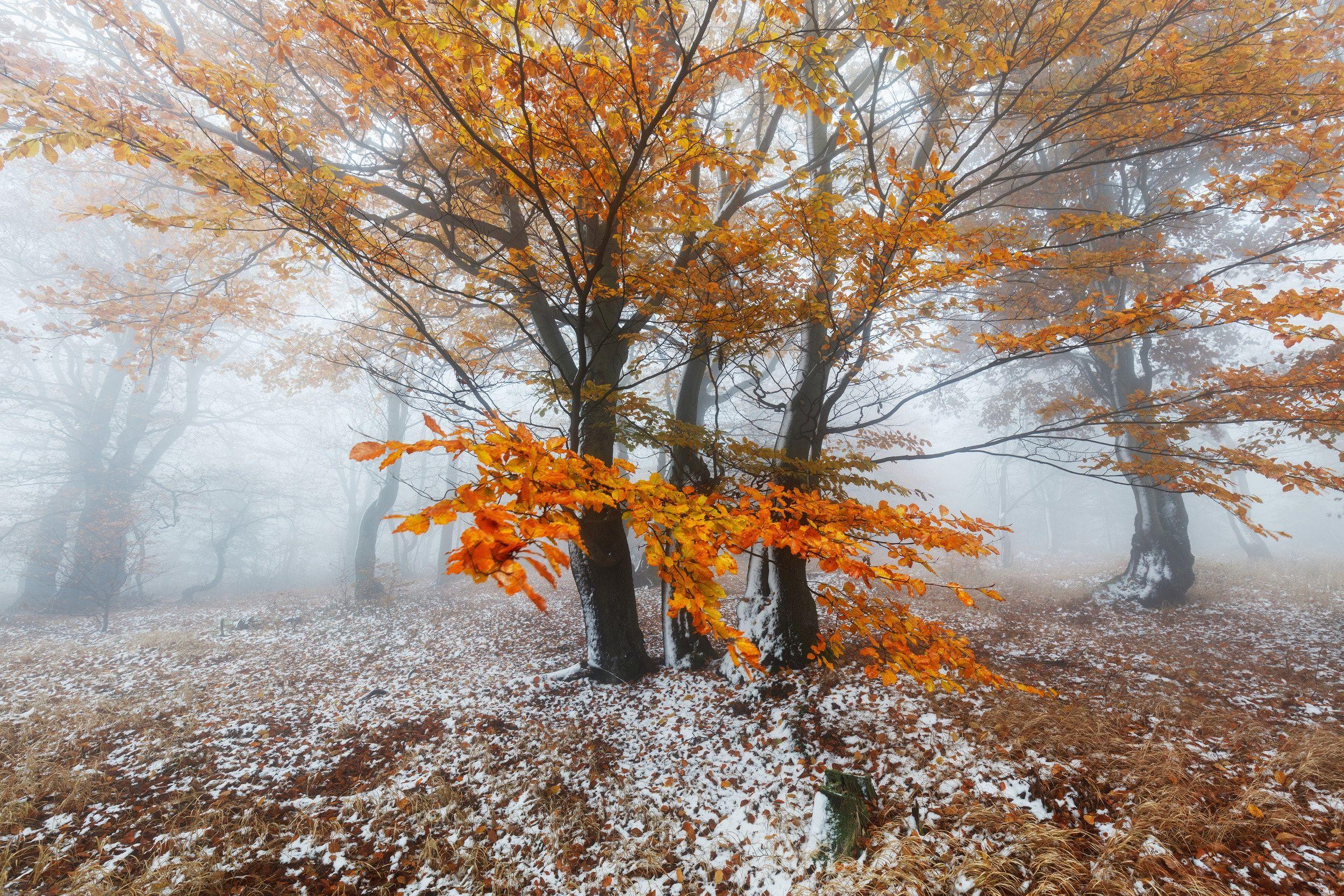 шарики получаются природа в конце ноября фото виды, имеющие